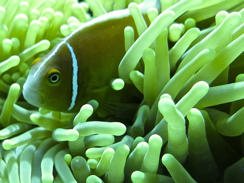 Quick quiz can you name the nemo news cairns luxury for What sound does a fish make